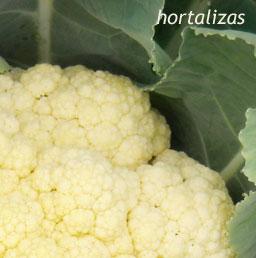 hortalizas2