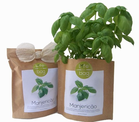 growbag_manjericao_set